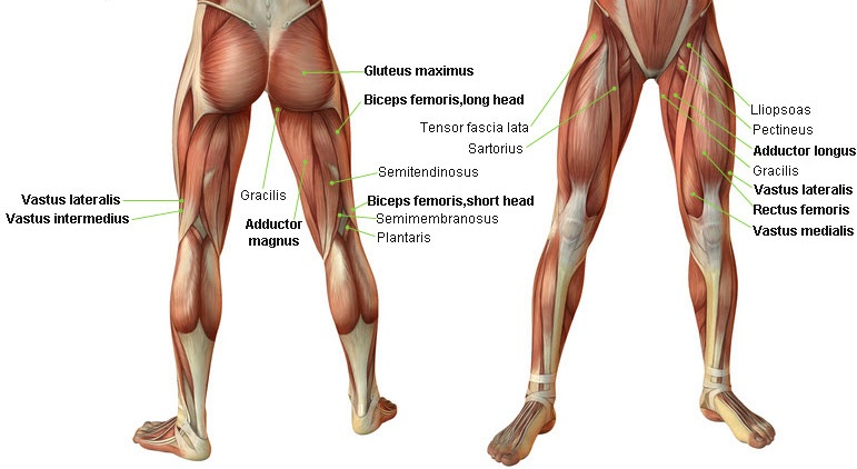 Top 5 Simple Exercises To Build Leg Muscles